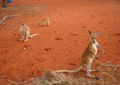 australia2