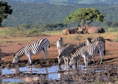 sud africa5