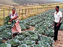 sud africa8